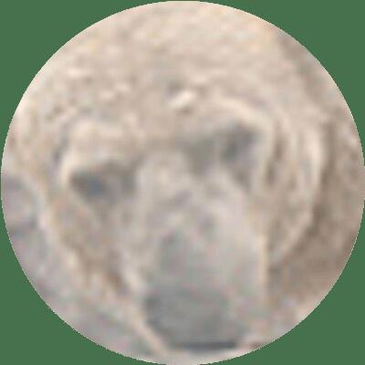 Akipii